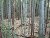40_2jyuu_horikiri_shukakugawa