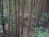 18_minami_2jyuu_horikiri