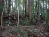 28_2maru_yori_karabori_shukaku_heki