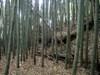 17_kihara_nai_dorui_heki