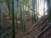 16_nisi_sita_yori_dai_horikiri