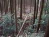 19_yokobori_yori_kita_kaku_1