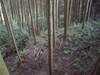 25_shukaku_yori_ootedou_dorui_1