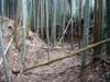 33_shukaku_haigo_dai_karabori